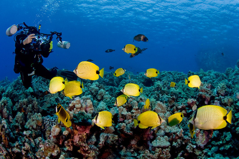 Butterflyfish - diverdave H Butterfly Fish